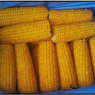 Кукуруза початки
